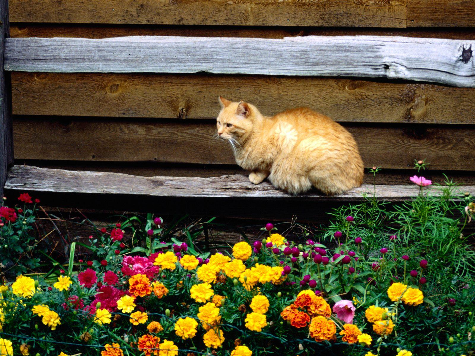 Кошки на дачу